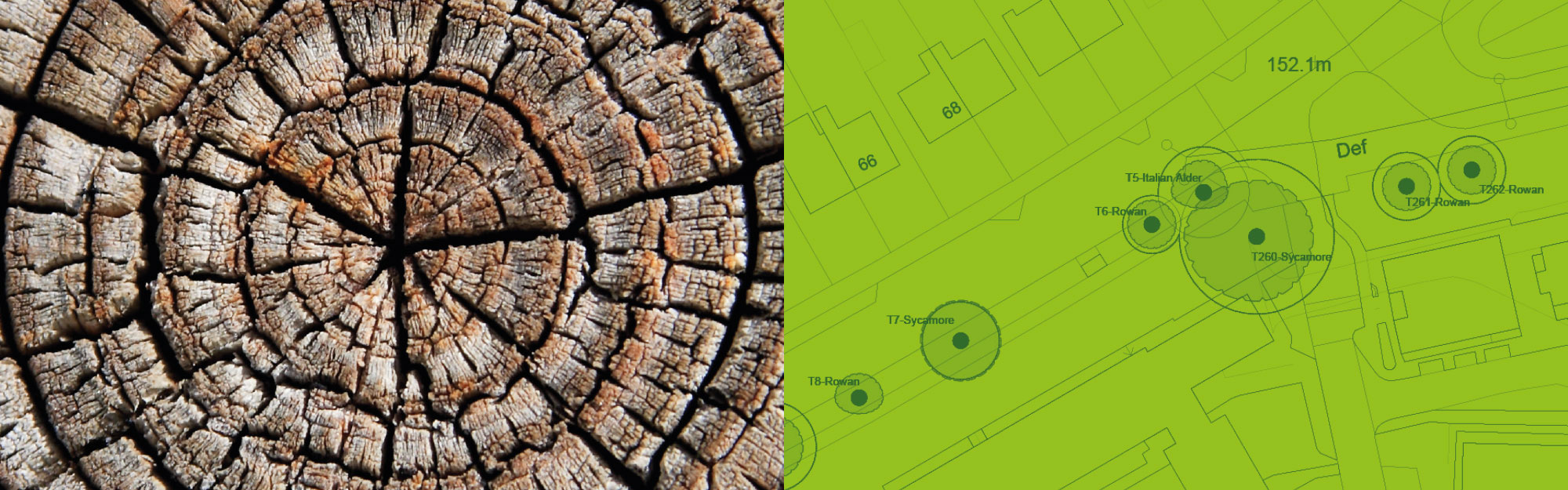 ArbTS Arboricultural Technician